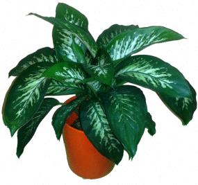 fengshui plantas